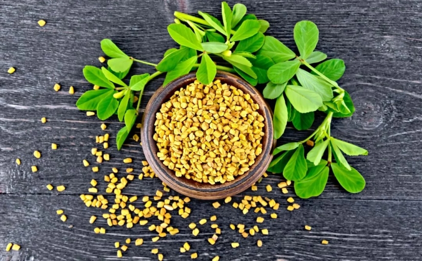 Health Secrets of Fenugreek