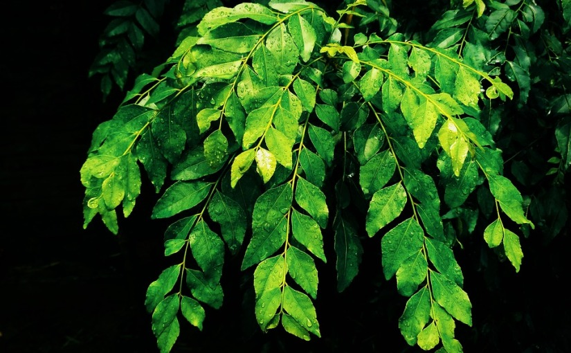 Curry Leaves and healthbenefits